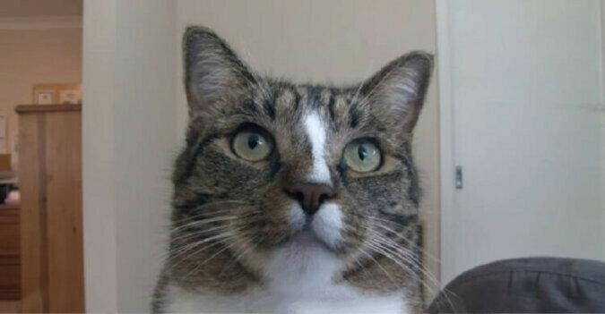 Ta kotka otrzymała tytuł najmądrzejszego kota na świecie według Księgi Rekordów Guinnessa