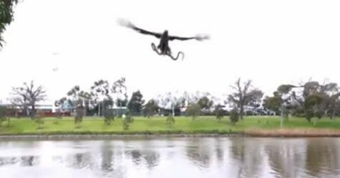 W Australii jastrząb zrzucił żywego węża na rodzinę, która przygotowywała grilla w parku
