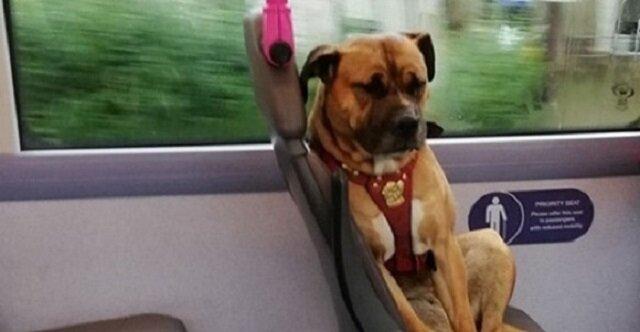 Mieszkańcy Anglii wzruszyli się na widok samotnego psa w autobusie