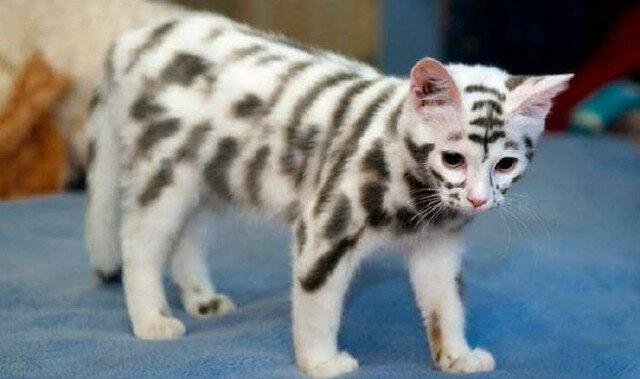 Koty, których kolor przyjemnie zadziwia