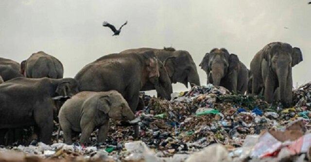 Jak zwierzęta nauczyły się wykorzystywać śmieci? Będziesz zaskoczony