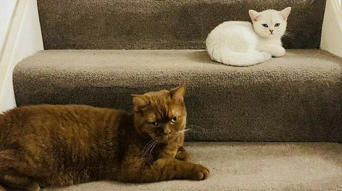 Nowe wyzwanie: użytkownicy szukają kota na choince wśród dekoracji, co nie jest takie proste - czy sobie z tym poradzisz?