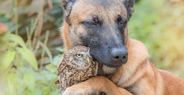 Niezwykła przyjaźń między wielkim psem a małym ptakiem. Czy to możliwe?
