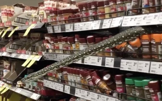 W Australii kobieta natknęła się na pytona wypełzającego z półki w supermarkecie. Wideo