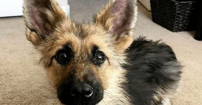 Pies z powodu fatalnej sytuacji na zawsze utknął w ciele szczeniaka