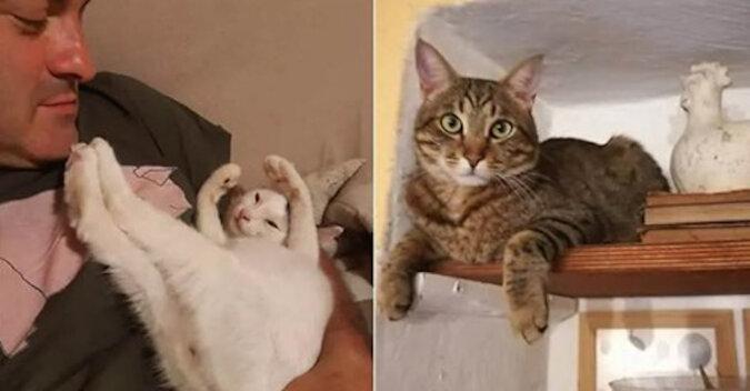 We Włoszech koty uratowały rodzinę przed osuwiskiem