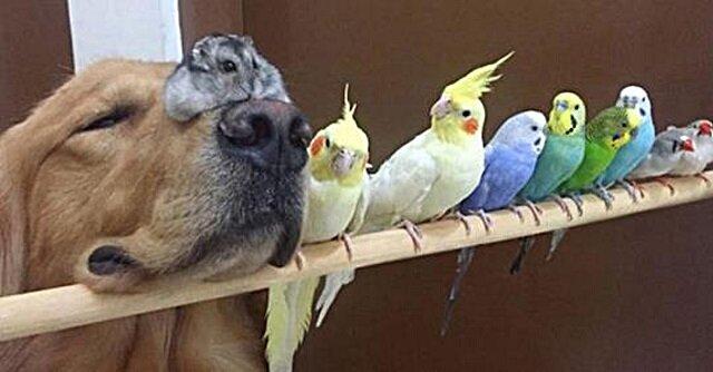 Śmieszne zdjęcia z życia ludzi, którzy mają w domu więcej niż trzy zwierzaki
