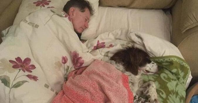Właściciele na zmianę śpią na sofie ze starym psem, aby nie czuł się samotnie