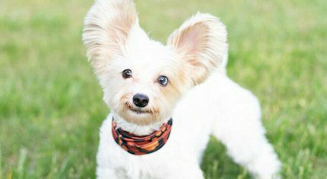 Urocze: chłopak dał dziewczynie w prezencie bukiet w kształcie jej psa