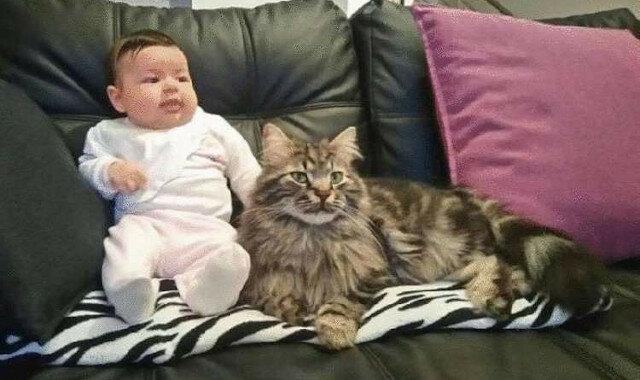 Kot, który przyszedł na farmę i szybko stał się prawdziwym pomocnikiem dla dziecka właścicielki