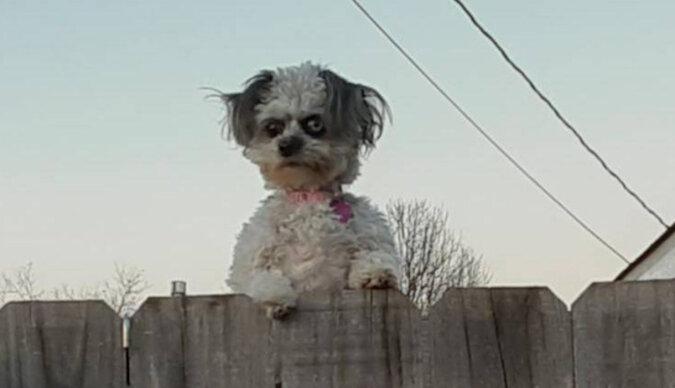 Złowieszcze zdjęcie sąsiedzkiego psa stało się jeszcze bardziej przerażającym memem