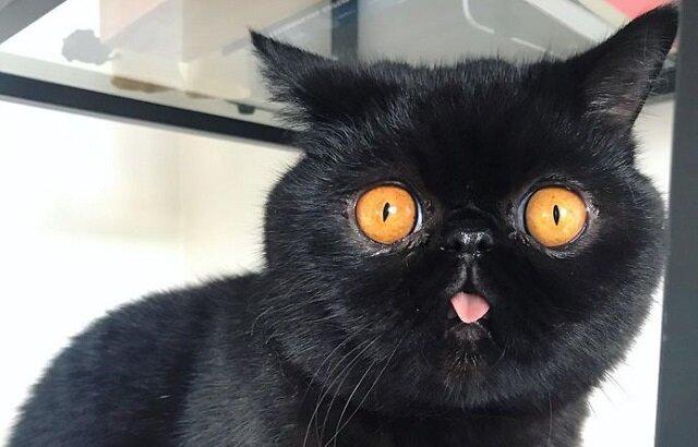 Czarniejsze niż noc i oczy jak okna do piekła: kot Gremlin zachwycił sieci społecznościowe