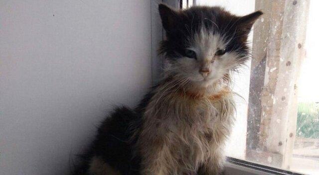 """Historia bezdomnego kociaka, który z """"brzydkiego kaczątka"""" zmienił się we """"wspaniałego łabędzia"""""""