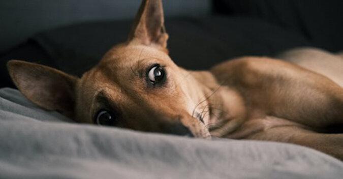 Pies zauważył, że właścicielka jest w ciąży. Jego reakcja jest bezcenna