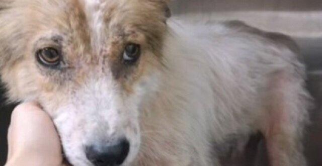 Pies mieszkał w starych oponach i nawet nie miał nadziei na ratunek