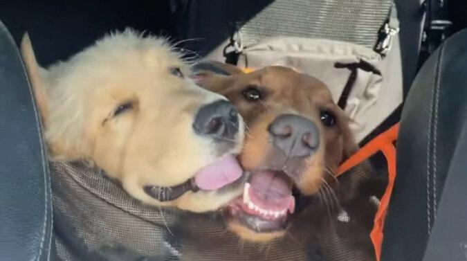Dwa psy uwielbiają się nawzajem: ich przyjaźń jest bardzo urocza. Wideo