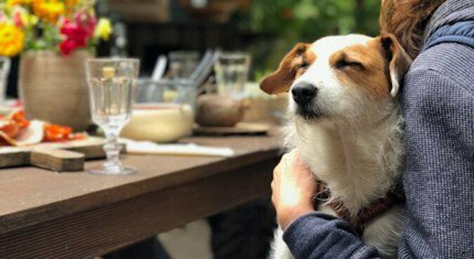 Przed i po: 10 zdjęć psów, które dowodzą, że miłość czyni cuda