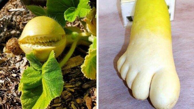 Pareidolia warzywna – to nie jest żart. Wyobraźnia może dużo nam podpowiedzieć
