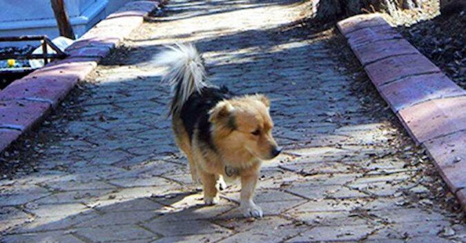 Serce mężczyzny zamarło, gdy dowiedział się, gdzie codziennie biega jego pies
