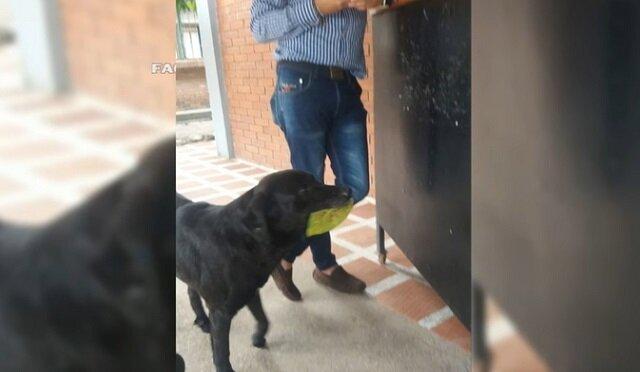 Pies przychodzi do sklepu kupić pożywienie za zerwane liście