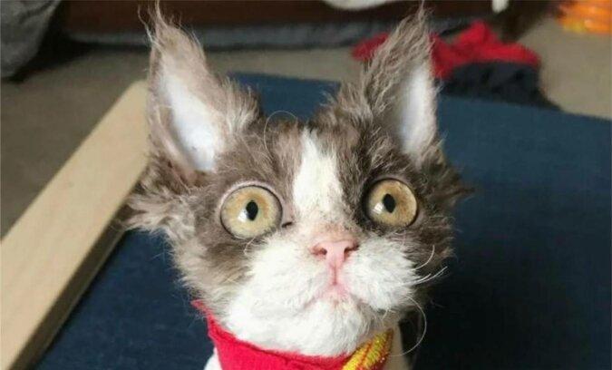 Historia Appy - kotki, którą nikt nie chciał zabrać ze schroniska