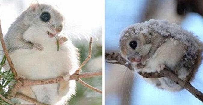 Polatuchy to najbardziej urocze stworzenia na świecie