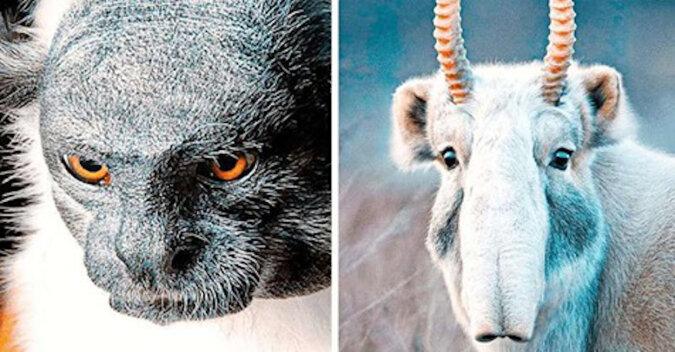 Chłopak przez 2 lata robił zdjęcia zagrożonych gatunków zwierząt. Zobacz