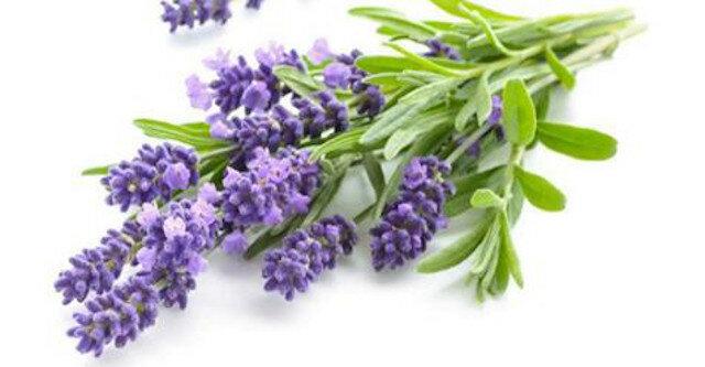 Kwiaty dla znaków zodiaku: wybór rośliny-talizmanu