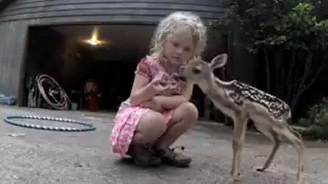 Mała dziewczynka pomogła małemu jelonkowi, który prosił o pomoc