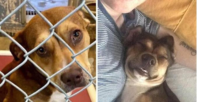 15 psów przed i po adopcji, kiedy ich życie w końcu przestało być kiepskim