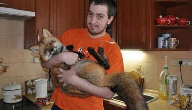 Mężczyzna kupił lisa z hodowli na futra, aby uratować go