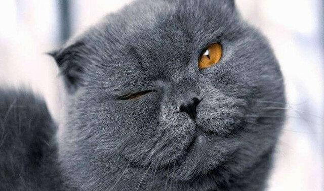 Babcia przyprowadziła kotkę do weterynarzy i zaczęła narzekać, że kotka rodzi co miesiąc