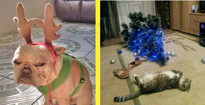Śmieszne zdjęcia zwierząt, które swoim wyglądem pokazują, że nie chcą świąt