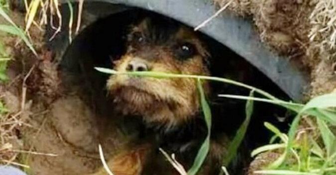 Pies ze smutkiem patrzył na człowieka z rury i nie mógł się ruszyć