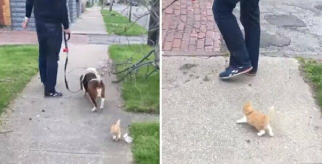 Malutki kociak postanawia podążać za spotkanymi ludźmi. To co się wydarzyło potem jest po prostu cudowne