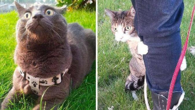 Koty, które po raz pierwszy wyszły na ulice