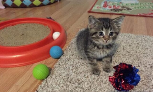 Wyjątkowy kociak uzyskał bliskiego przyjaciela, którego nazywano jego matką