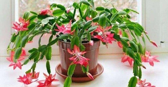 Nawet w nocy uwalniają tlen. 9 roślin które warto mieć w sypialni