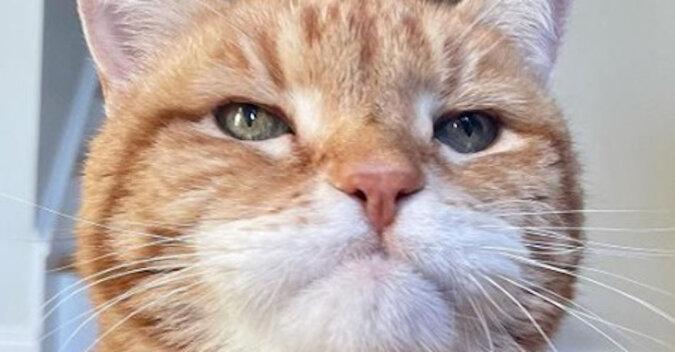 Kot ma tak zabawną niezadowoloną minę, że zamiast emotikonu można ją wysyłać