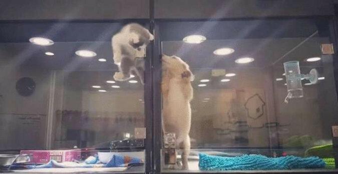 Desperacka ucieczka małego kociaka do nowego przyjaciela poruszyła internautów