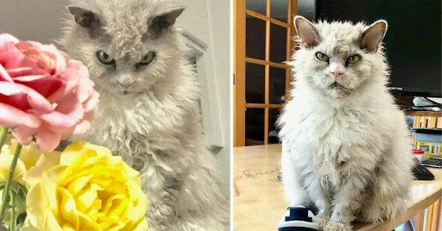 Najsurowszy kot świata – Albert, wiedzą o nim na całym świecie