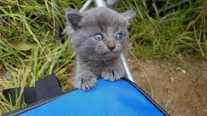 Bezdomny kociak zrozumiał, że jego właścicielem jest mężczyzna łowiący w pobliżu ryby