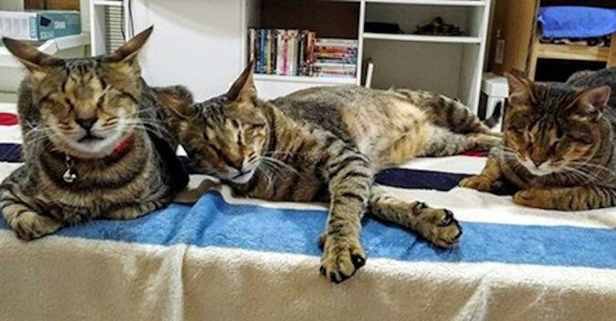 Kobieta zabrała ze schroniska trzy niewidome koty, które od roku czekały na nowych właścicieli