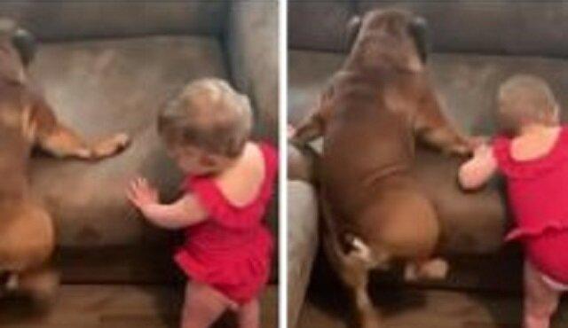 Te zabawne dzieciaki próbują podbić sofę. Bardzo zabawny filmik