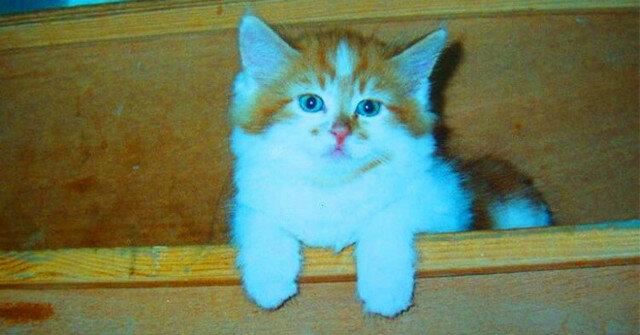 Kamyczek - kot, który obchodzi swoje 30 urodziny