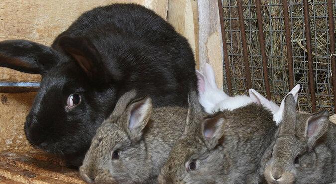 Nowe życie jest zawsze niesamowite. Internauci zachwyceni małymi królikami. Wideo