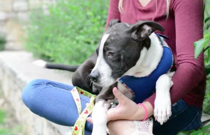 Pies, który niedawno żegnał się z życiem, zmienił się i rozkwitł dzięki kochającej rodzinie