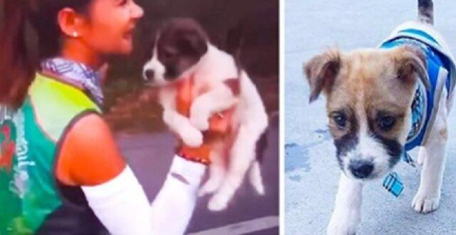 Aby uratować szczeniaka, uczestniczka maratonu przez 30 km biegła z nim na rękach