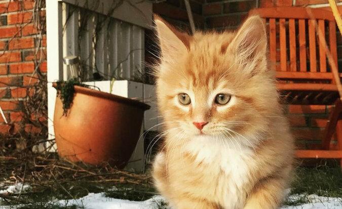 Adoptowany kociak okazał się poszukiwaczem przygód, a jego piękny ogon trzeba zobaczyć