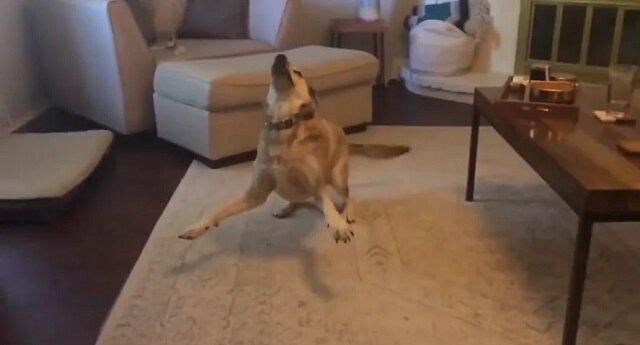 Kobieta zaprosiła psa na spacer i jej reakcja jest bezcenna. Wideo